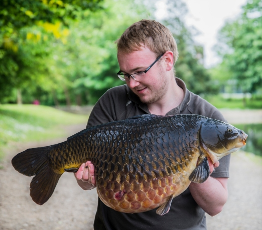 big common 3